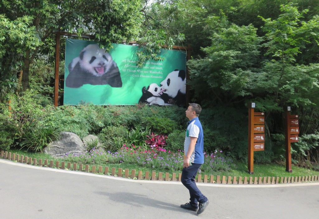 panda11