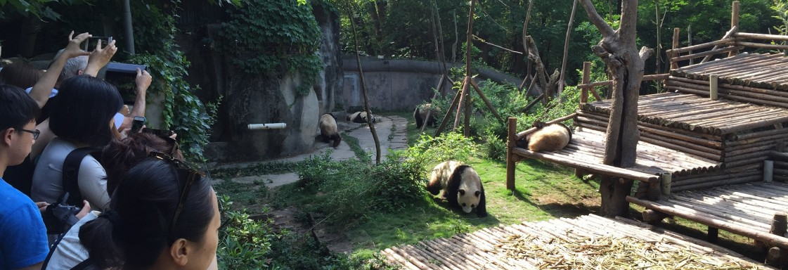 Chengdu Pandas – Part 2 – The Pandas